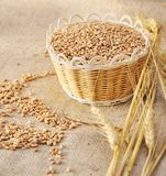 Wheat seeds on rough material Royalty Free Stock Images
