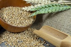 Wheat seeds spilling from a bowl with ears stock photo