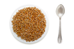 Wheat seeds with sprouts Royalty Free Stock Photos