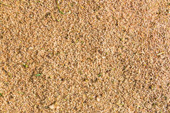Wheat seeds | Texture Royalty Free Stock Images