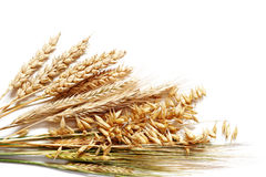 Wheat selection Royalty Free Stock Photo