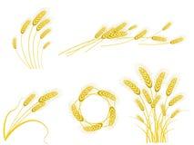 Wheat set. Set of yellow wheat on white background Stock Image