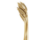 Wheat set royalty free stock images