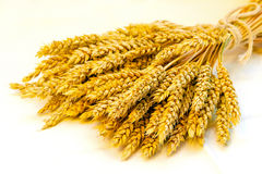 Wheat sheaf Stock Photography