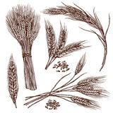 Wheat Sketch Set. Wheat ears cereals crop sketch decorative icons set  vector illustration Royalty Free Stock Images