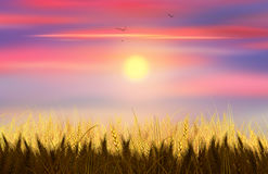 Wheat and sky. Wheat field background. Beautiful Gold Wheat field and blue sky with clouds. Shavuot, Jewish Holiday. Digital illustration, Hand Drawn. Rural Stock Photo