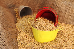 Wheat sowing seed Royalty Free Stock Photography