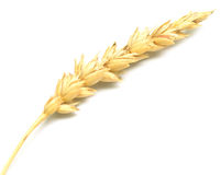 Wheat spike. On white Stock Photography