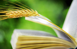 Wheat spike on  book Royalty Free Stock Image