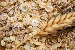 Wheat spike Stock Photo