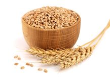 Wheat spike and wheat grain in a wooden bowl isolated on white background.  Stock Images