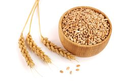 Wheat spike and wheat grain in a wooden bowl isolated on white background.  Royalty Free Stock Images