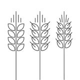 Wheat spike vector icons set isolated outline style spica royalty free illustration