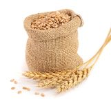 Wheat spike and wheat grain in burlap bag isolated on white background.  Stock Image