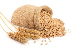 Wheat spike and wheat grain in burlap bag isolated on white background.  Royalty Free Stock Photos