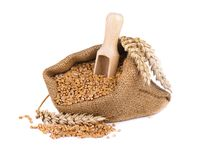 Wheat spike and wheat grain in burlap bag isolated on white background.  Stock Images