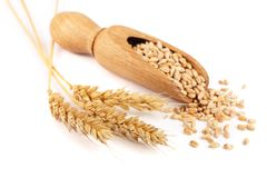 Wheat spike and wheat grain in a wooden scoop isolated on white background.  Royalty Free Stock Photos