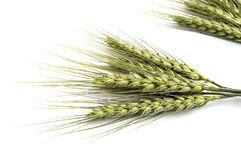 Wheat spike with white background, wheat spike plant, sample wheat spike Royalty Free Stock Images
