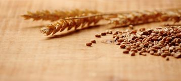 Wheat Spike wiht corn close up Royalty Free Stock Photos