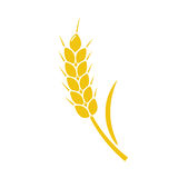 Wheat Spike Yellow Isolated Royalty Free Stock Photos
