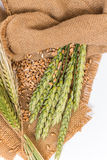 Wheat spikelet Stock Photography