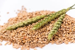 Wheat spikelet Stock Photo