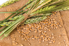 Wheat spikelet Royalty Free Stock Image