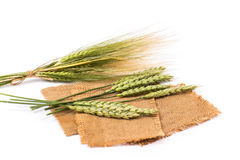 Wheat spikelet Stock Photo
