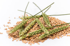 Wheat spikelet Royalty Free Stock Images