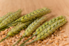 Wheat spikelet Royalty Free Stock Photo
