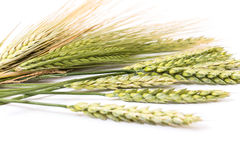 Wheat spikelet Royalty Free Stock Photos