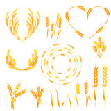 Wheat spikelets illustration. royalty free illustration