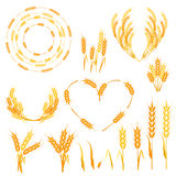 Wheat spikelets vector illustration. Royalty Free Stock Image