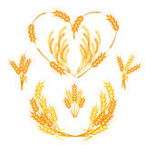 Wheat spikelets vector illustration. Stock Photos
