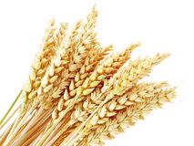 Wheat  spikes Royalty Free Stock Images