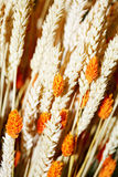 Wheat spikes Royalty Free Stock Photos