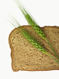 Wheat Spikes and Bread Slice. Winter wheat spikes lay across a whole wheat slice of bread, pairing the raw grain and the end product stock images