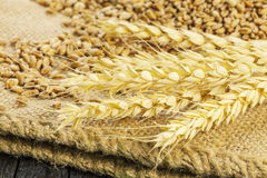 Wheat Spikes with grain on jute fabric Stock Photography