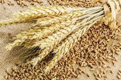 Wheat Spikes on grain on rustic jute fabric Stock Photo