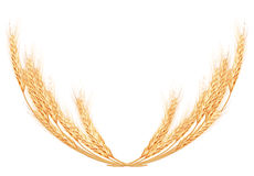 Wheat spikes on white template. EPS 10 Royalty Free Stock Images