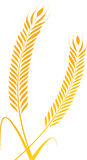 Wheat springs. Vector illustration of wheat springs royalty free illustration