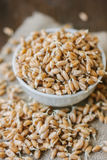 Wheat sprouts in a white ceramic bowl standing on piece of fabric material. Royalty Free Stock Photo