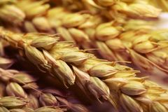 Wheat stack Stock Images