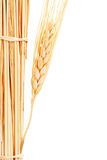 Wheat stack stock photography
