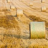 Wheat Sheaf in a Field. Wheat stack in a field on a farm near village . Straws of wheat stacked in rows Royalty Free Stock Photos