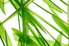 Wheat stalk background Royalty Free Stock Photography