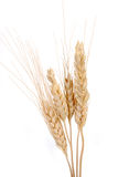 Wheat stalks Royalty Free Stock Photo