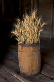 Wheat stalks in a barrel. Several wheat stalks are stacked in a wooden barrel stock photography