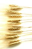 Wheat stalks on white Royalty Free Stock Image