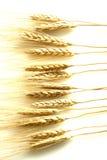 Wheat stalks on white Royalty Free Stock Image